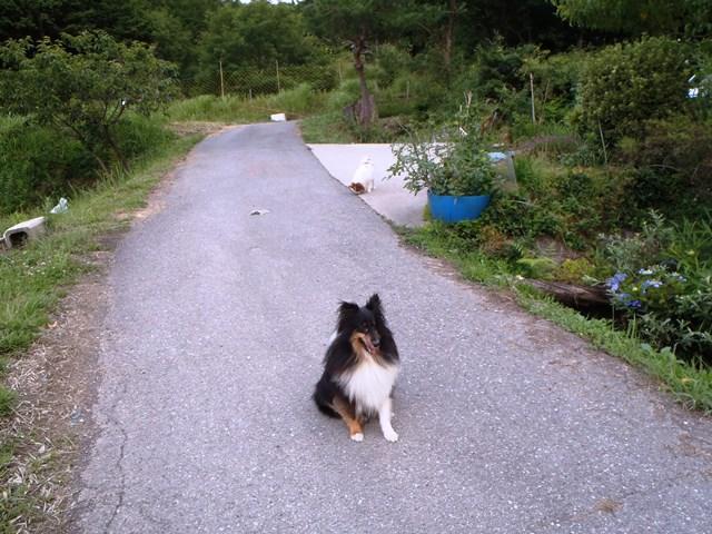 番犬と遊び犬20150628