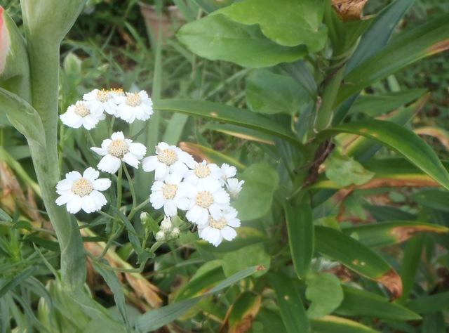 この花はなんだろう120150723