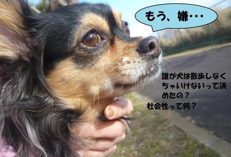 ひー_convert_20150213181825