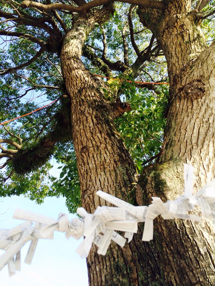 大石神社の木