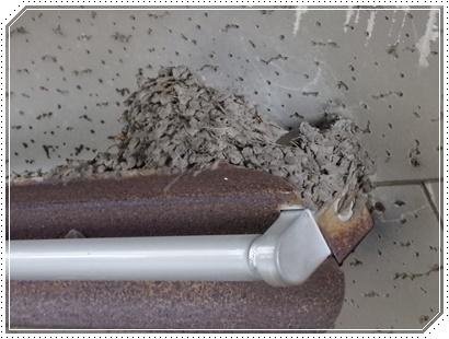 椿窯 ツバメ巣