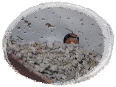 椿窯 巣の中
