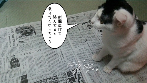 ワカメ新聞