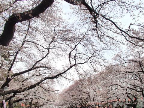150328上野公園02