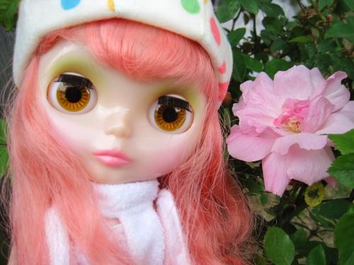ピンンクの薔薇