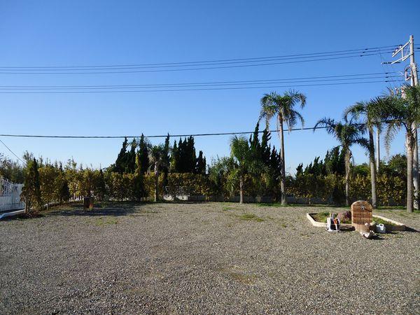 右側生垣植栽完了