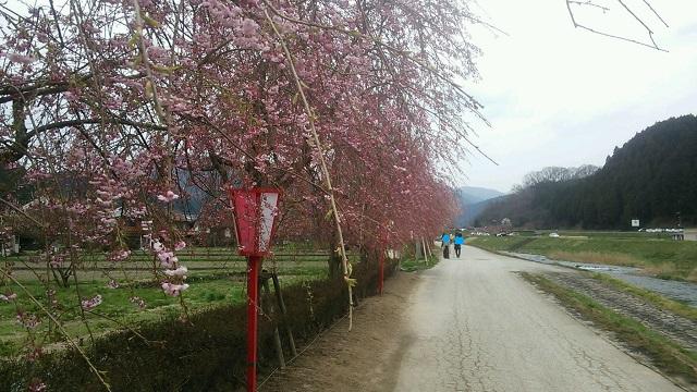 150416 新庄 土手の枝垂れ桜 ブログ用目隠し