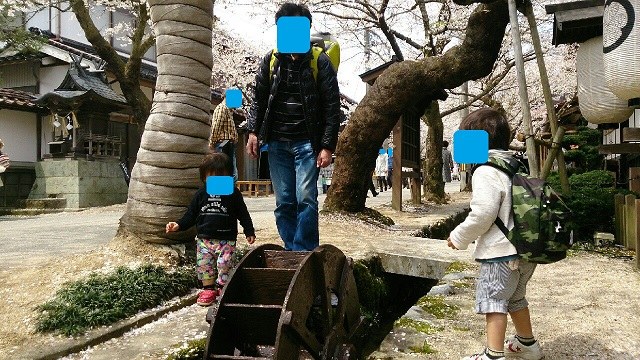 1504165 新庄 がいせん桜にて④ ブログ用目隠し