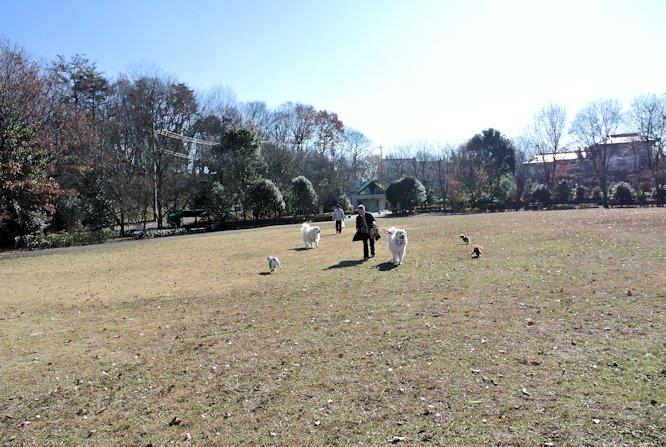 2014長岡公園1366