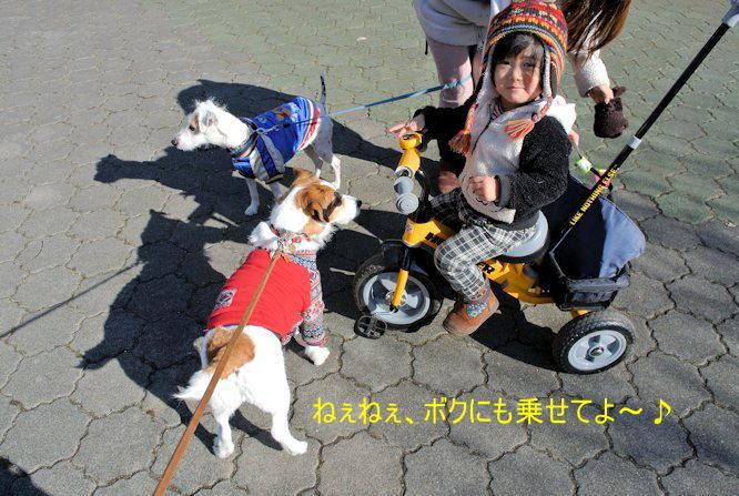 2014長岡公園1431