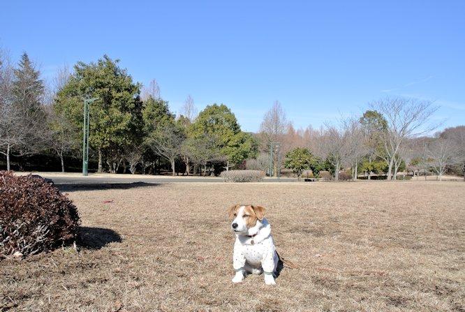2015長岡公園0114
