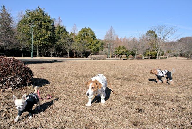 2015長岡公園0115