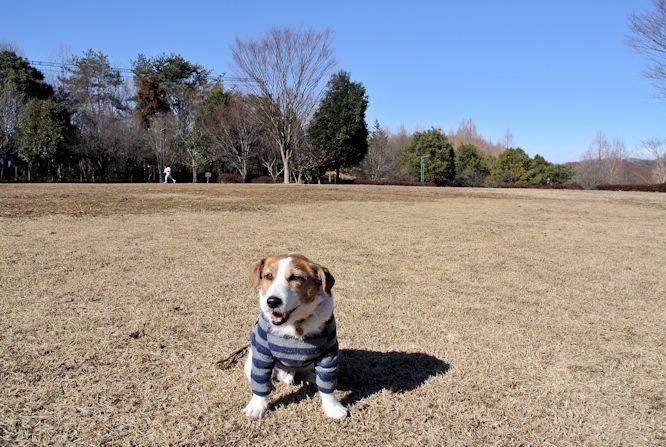 2015長岡公園0119