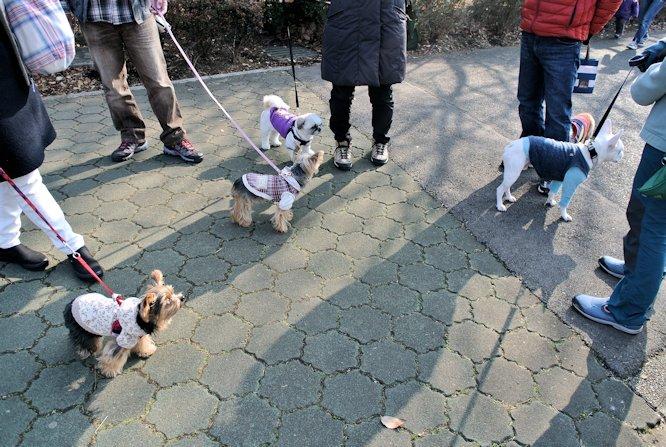 2015長岡公園0174