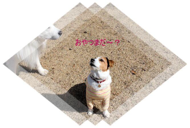 2015長岡公園0212