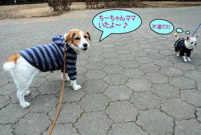 2015長岡公園0243