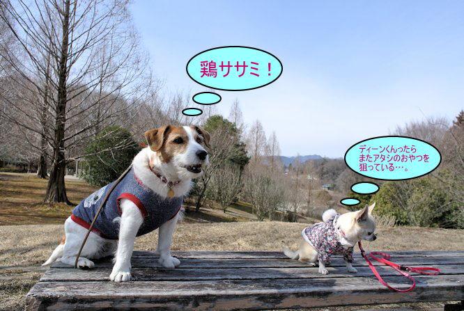 2015長岡公園0292
