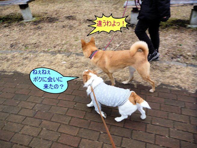 2015長岡公園0304
