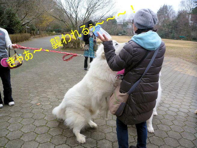 2015長岡公園0312