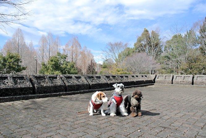 2015長岡公園0319
