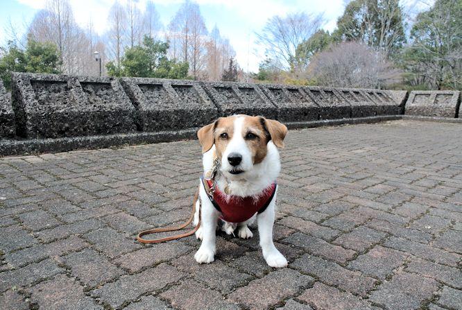 2015長岡公園0320