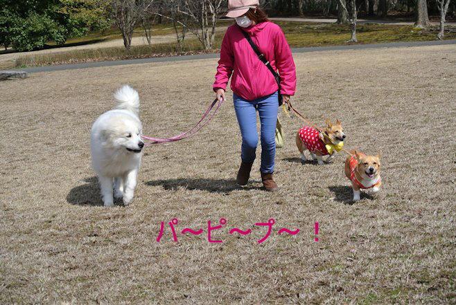 2015長岡公園0328