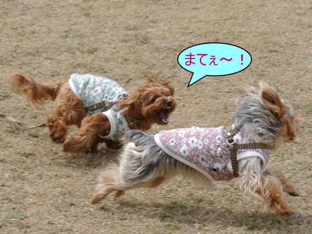 2015長岡公園0356