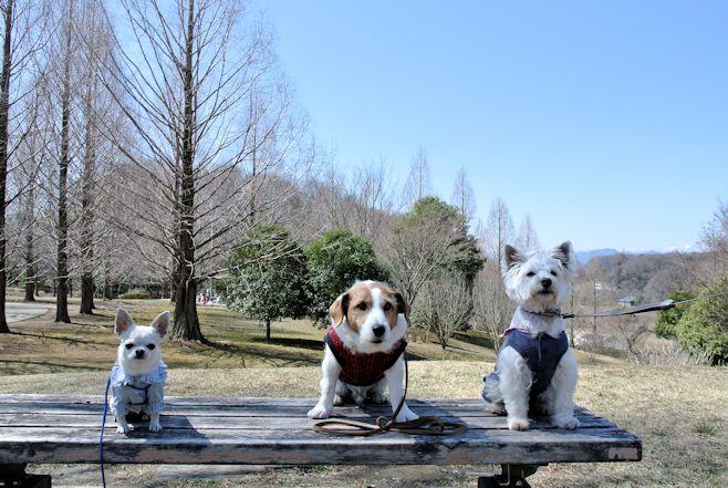 2015長岡公園0384