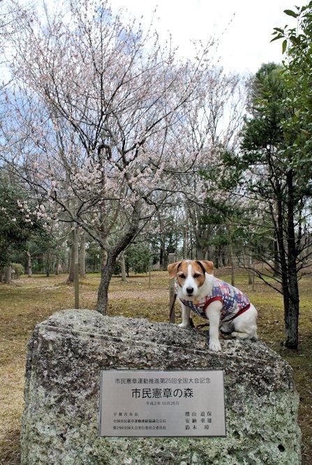 2015長岡公園0397