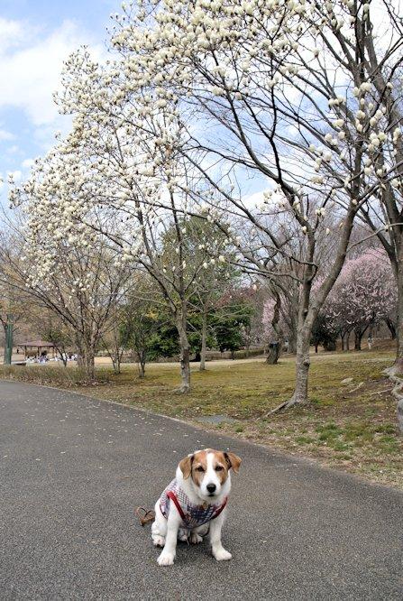 2015長岡公園0399