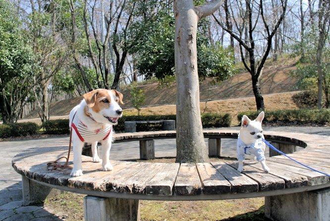 2015長岡公園0408
