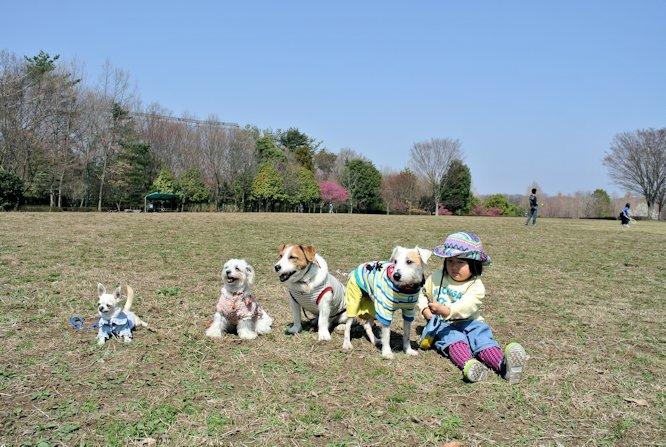 2015長岡公園0406