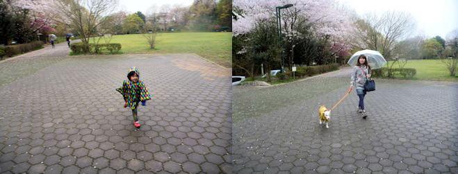 2015長岡公園0423