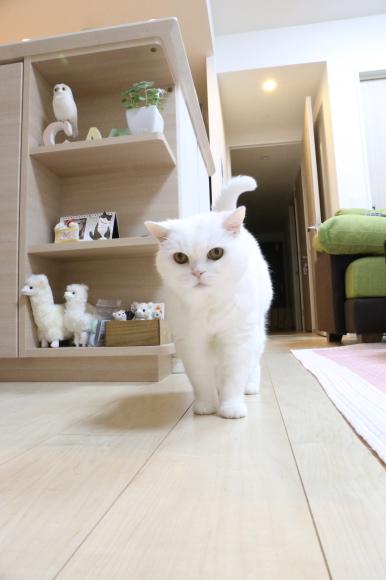 IMG_2135urabanashi.jpg