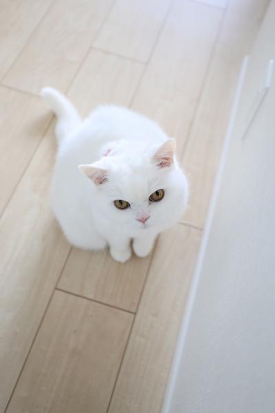 IMG_2891urabanashi.jpg