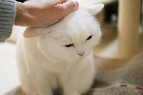 IMG_3124urabanashi.jpg