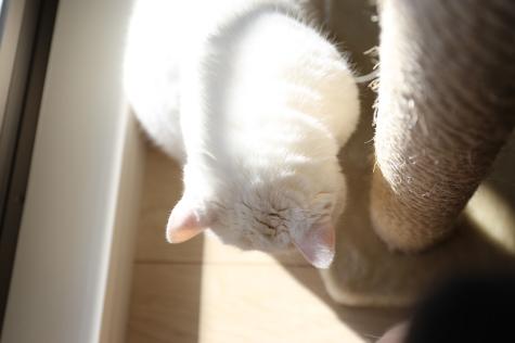 IMG_3526urabanashi.jpg