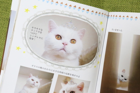 IMG_7314urabanashi.jpg