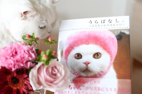 IMG_7419urabanashi.jpg