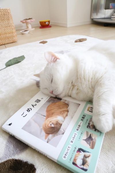 IMG_7497urabanashi.jpg