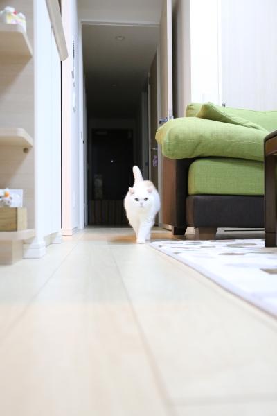 IMG_7663urabanashi.jpg