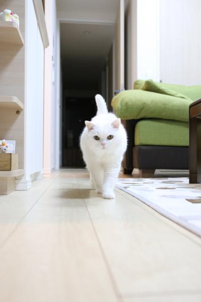 IMG_7668urabanashi.jpg