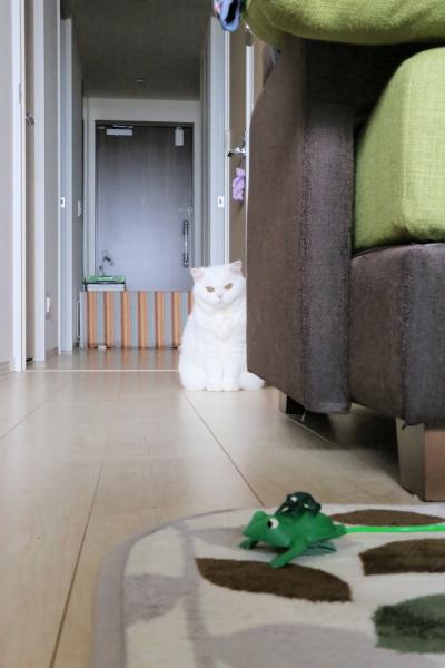 IMG_8848urabanashi.jpg