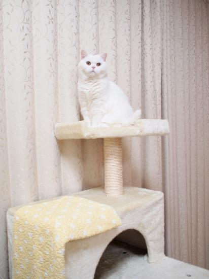 P2244734urabanashi.jpg