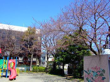 sakura032401.jpg