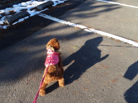 新年初散歩