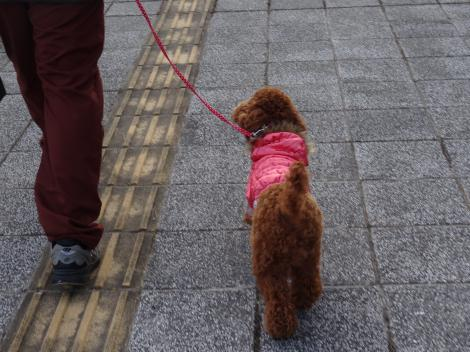 パパとお散歩