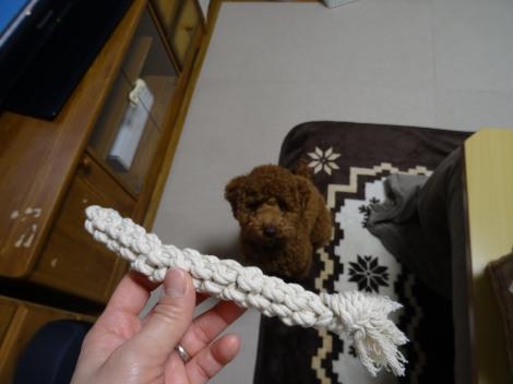 ロープのおもちゃ