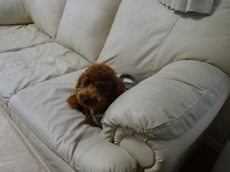 ソファーでねんね