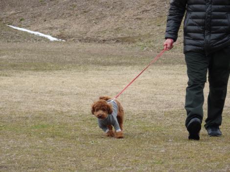 父ちゃんとお散歩